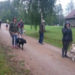 Juhtkoerakasutajad koos koertega kahel pool tee-ääres kõndimas