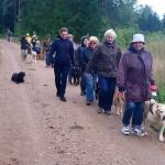 Juhtkoerakasutajad koos koertega tee-ääres kõndimas