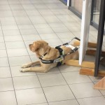 Soome tandemi koer kohta hoidmas